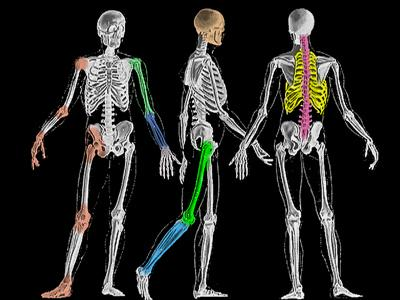 Tulang bantu ramal usia