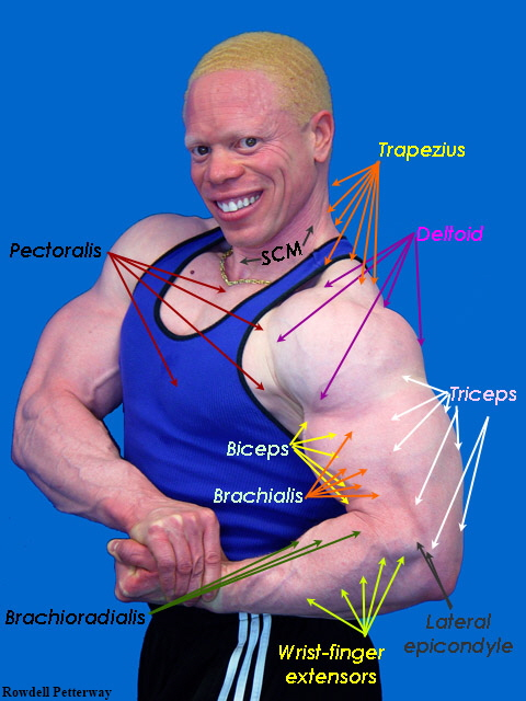 how to get good arm muscles